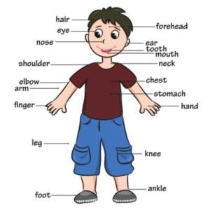 Expressões Idiomáticas em Inglês Com Partes do Corpo